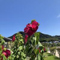 道の駅 保田小学校の写真・動画_image_629247