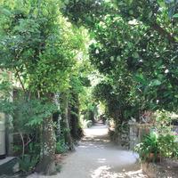 備瀬のフクギ並木の写真・動画_image_632676