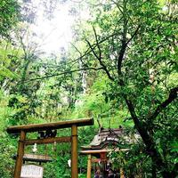 幣立神宮(幣立神社)の写真・動画_image_636629