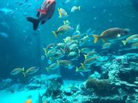 沖縄美ら海水族館の写真・動画_image_643842