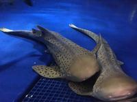 新江ノ島水族館の写真・動画_image_643935