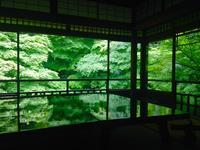 瑠璃光院の写真・動画_image_664322
