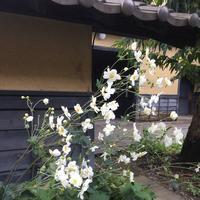 栗の小径の写真・動画_image_666013