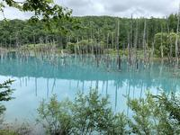 青い池の写真・動画_image_671236