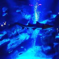 すみだ水族館の写真・動画_image_671716