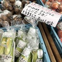 道の駅 阿蘇の写真・動画_image_675637
