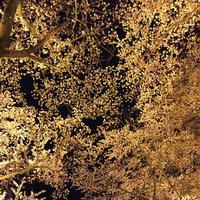 三井寺の写真・動画_image_683468