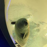 海遊館の写真・動画_image_683591
