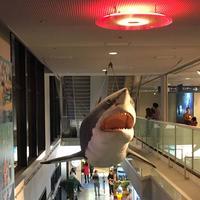 海遊館の写真・動画_image_683593