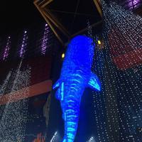 海遊館の写真・動画_image_683601