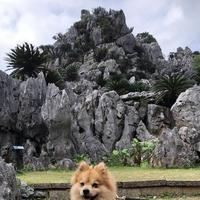 大石林山の写真・動画_image_697745