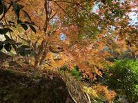 明月院(あじさい寺)の写真・動画_image_699001