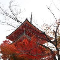 清水寺の写真・動画_image_709802