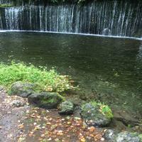 白糸の滝の写真・動画_image_712601