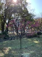 芝公園の写真・動画_image_728479