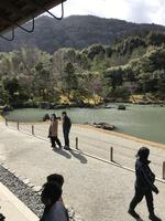 天龍寺の写真・動画_image_734457