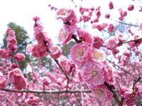 京都御苑の写真・動画_image_744865