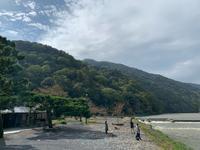 渡月橋の写真・動画_image_831872