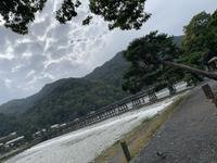 渡月橋の写真・動画_image_831877