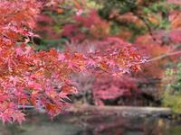 曽木公園の写真・動画_image_838373