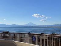 新江ノ島水族館の写真・動画_image_866846
