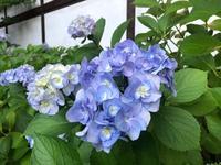 氷川神社の写真・動画_image_938361