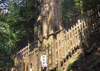 玉置神社の写真・動画_image_39313