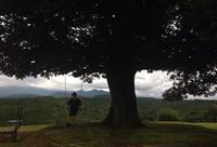 天空の森の写真・動画_image_42548