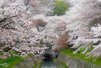 園城寺の写真・動画_image_75016