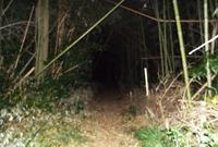 シガイの森の写真・動画_image_188320