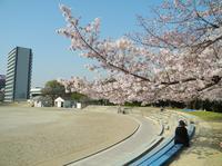 桜の名所の写真・動画_image_32667