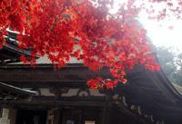 西明寺の写真・動画_image_204384