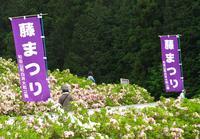 白井大町藤公園の写真・動画_image_30050