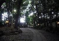 代々木八幡宮の写真・動画_image_52575