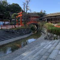 下鴨神社(賀茂御祖神社)の写真・動画_image_901561