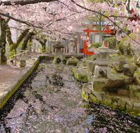 播磨国総社の写真・動画_image_172924