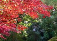 狸福神社の写真・動画_image_20535
