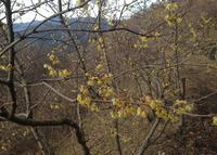 宝登山の写真・動画_image_21166