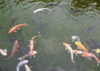 日本庭園 万博公園の写真・動画_image_28280