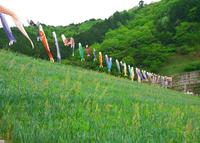 白井大町藤公園の写真・動画_image_30049