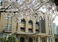 桜の名所の写真・動画_image_32666