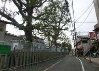 茨田堤の写真・動画_image_38046