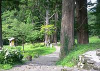 白山中居神社の写真・動画_image_47325