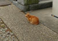 光明寺の写真・動画_image_50095