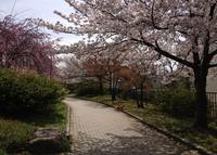 久世ニューリバー公園の写真・動画_image_134528