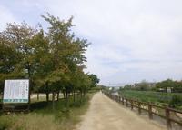 天野川緑地の写真・動画_image_136445