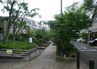 楠根川跡緑陰歩道の写真・動画_image_142217