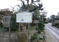顕本寺の写真・動画_image_179070