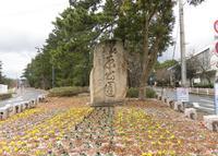 気比の松原の写真・動画_image_301246