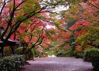 胡宮神社の写真・動画_image_462924